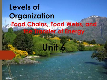 Levels of Organization Food Chains, Food Webs, and the Transfer of Energy Unit 6.