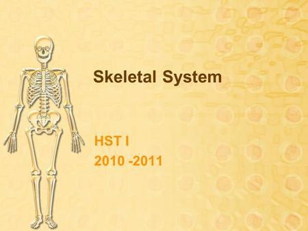 Health Occupations Skeletal System – Unit ppt download