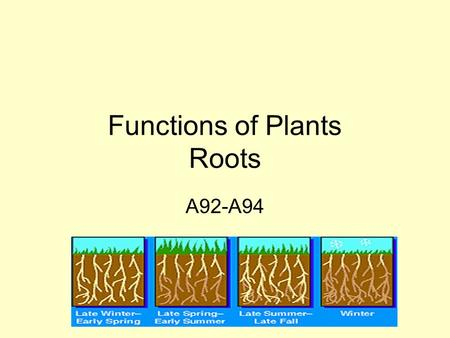 Functions of Plants Roots A92-A94. Vascular Plants Vascular plants have tubes. These tubes can be found in roots, stems, and leaves. The tubes form a.