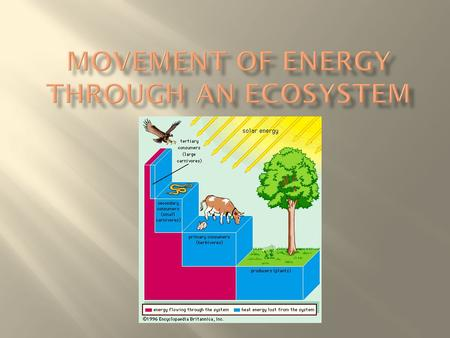  the transfer of energy and matter in the form of food when one organism eats another organism.