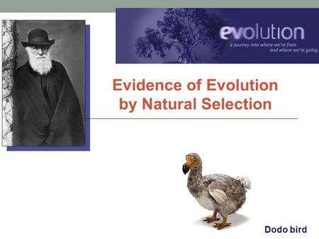 Evidence of Evolution by <strong>Natural</strong> Selection Dodo bird.