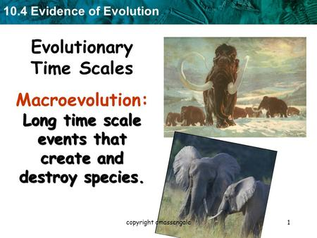 10.4 Evidence of Evolution 1 Evolutionary Time Scales Long time scale events that create and destroy species. Macroevolution: Long time scale events that.