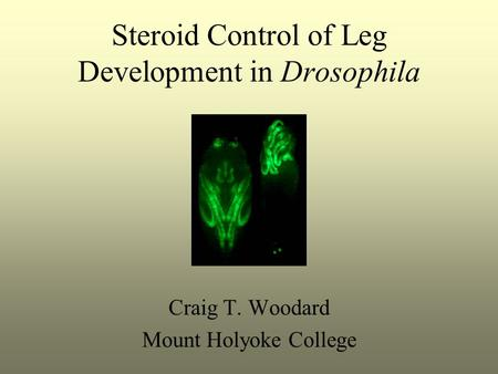 Steroid Control of Leg Development <strong>in</strong> <strong>Drosophila</strong> Craig T. Woodard Mount Holyoke College.