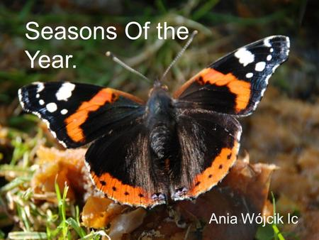Pory Roku. Ania Wojcik Ic Seasons Of the Year. Ania Wójcik Ic.