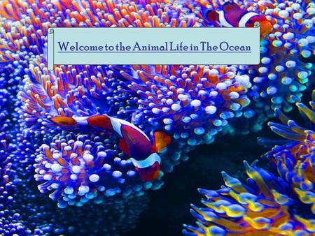 Welcome to the Animal Life in The Ocean