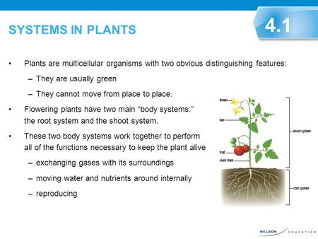 SYSTEMS IN PLANTS 4.1 Plants are multicellular organisms with two obvious distinguishing features: They are usually green They cannot move from place to.