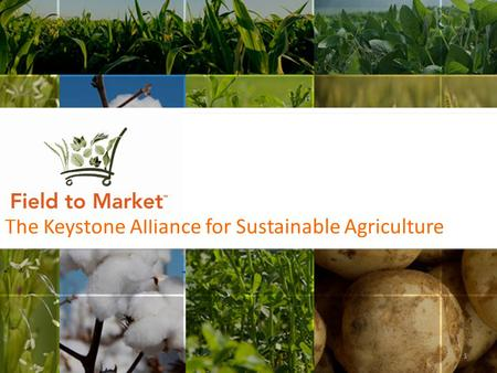 The Keystone Alliance for Sustainable Agriculture 1.