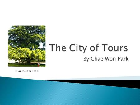 The City of Tours By Chae Won Park Giant Cedar Tree.