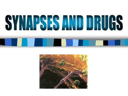 SYNAPSES AND DRUGS.