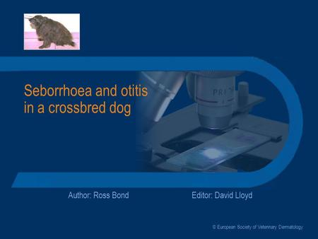 Seborrhoea and otitis in a crossbred dog Author: Ross BondEditor: David Lloyd © European Society of Veterinary Dermatology.
