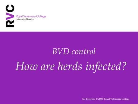 BVD control How are herds infected? Joe Brownlie © 2008 Royal Veterinary College.