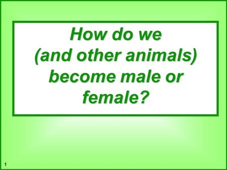 (and other animals) become male or female?