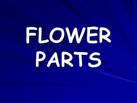 FLOWER PARTS. STAMEN Male part of the flower Made up of two parts –Anther –Filament.