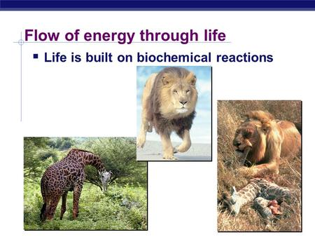 Flow of energy through life  Life is built on biochemical reactions.