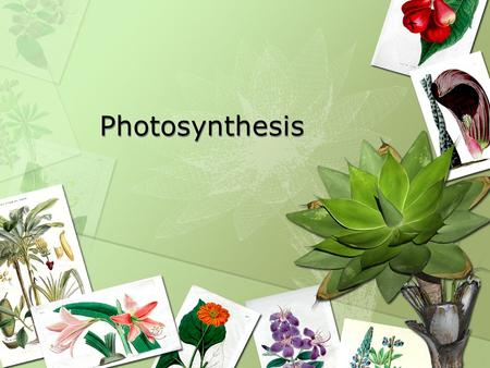 <strong>Photosynthesis</strong> <strong>Photosynthesis</strong>. What is <strong>photosynthesis</strong>? The process <strong>plants</strong> use to make their own food <strong>Photosynthesis</strong> takes place <strong>in</strong> the leaves <strong>Plants</strong>'