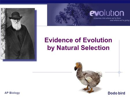 AP Biology 2007-2008 Evidence of Evolution by <strong>Natural</strong> Selection Dodo bird.