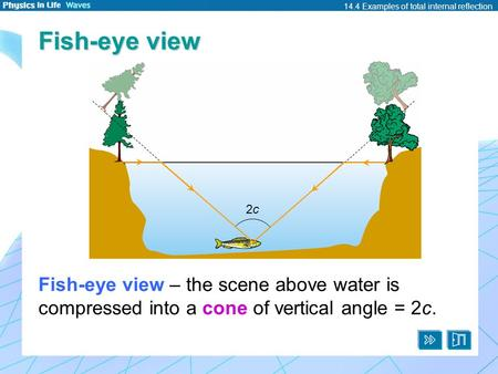 14.4 Examples of total internal reflection Fish-eye view Fish-eye view – the scene above water is compressed into a cone of vertical angle = 2c. 2c2c.