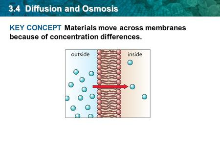 KEY CONCEPT Materials move across membranes because of concentration differences. 3.4 Diffusion and Osmosis.