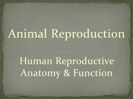 Animal Reproduction Human Reproductive Anatomy & Function.