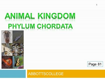 ABBOTTSCOLLEGE 1 Page 81. CHORDATES  Animals that have a backbone  Most advanced type of animal.