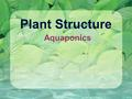 Plant Structure Aquaponics. Shoot system Root system Reproductive shoot (flower) Terminal bud Node Internode Blade Vegetable shoot Terminal bud Petiole.