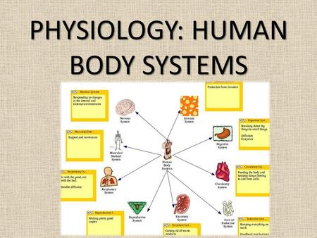 "PHYSIOLOGY: HUMAN BODY SYSTEMS. Homeostasis ""Keeping things in balance"" process by which organisms keep internal conditions relatively constant despite."