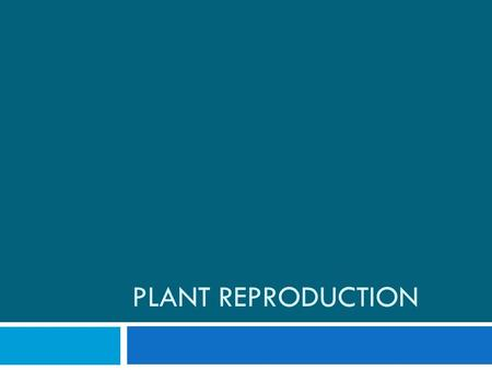 PLANT REPRODUCTION. Male Plant Reproductive System  Stamen  Contains the anther and the filament.