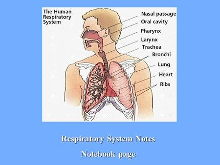Respiratory System Notes Notebook page. 1. Respiration Moves oxygen (O 2 )from the outside environment into the body Removes carbon dioxide (CO 2 ) and.