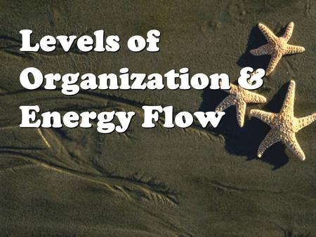 Levels of Organization & Energy Flow. I.The Biosphere Biosphere 2 Biosphere 2 I.The Biosphere Biosphere 2 Biosphere 2 Oikos = house this is the root word.