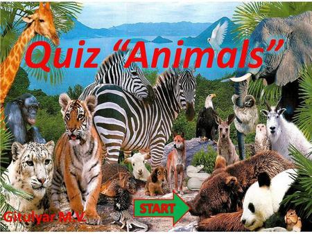 What Animal Am I? By: Missy Alvarado What animal am I? I