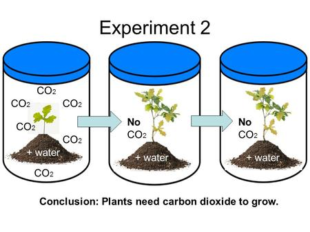 Experiment 2 + water CO 2 No CO 2 + water Conclusion: <strong>Plants</strong> need carbon dioxide to grow.