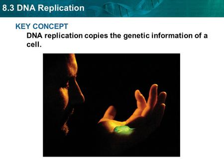 8.3 DNA Replication KEY CONCEPT DNA replication copies the genetic information of a cell.
