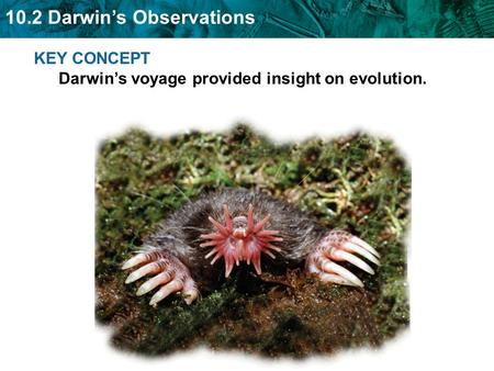 10.2 Darwin's Observations KEY CONCEPT Darwin's voyage provided insight on evolution.