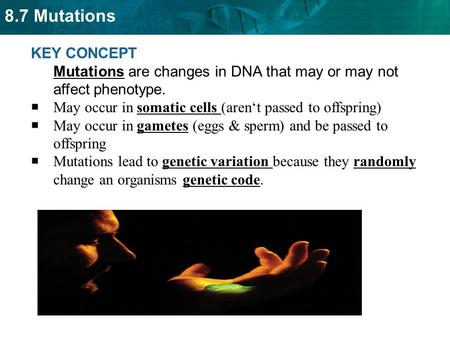 8.7 Mutations KEY CONCEPT Mutations are changes in DNA that may or may not affect phenotype.  May occur in somatic cells (aren't passed to offspring)