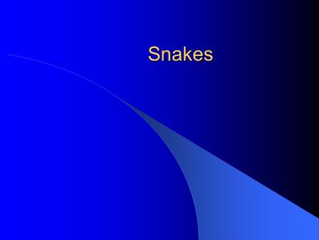 Snakes. What is a snake? It is more than just being legless – Amphisbaenians are legless. – Caecilians are legless – Legless lizards Legg loss seems to.