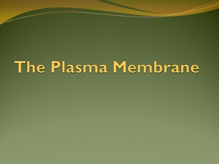Plasma Membrane Function Maintains balance by controlling what enters and exits the cell What characteristic of life is this? HOMEOSTASIS Membrane is.