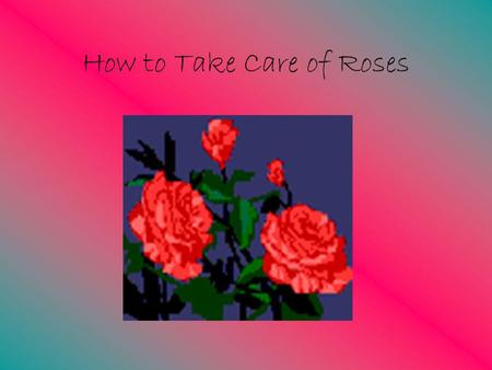 how to take care of roses in arizona