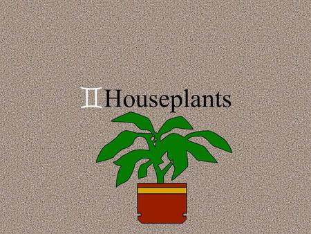 `Houseplants `Caring for houseplants `W`Watering `s`signs of improper watering `d`drooping leaves - lack of water.