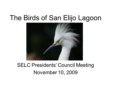 The Birds of San Elijo Lagoon SELC Presidents Council Meeting November 10, 2009.