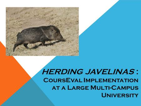 HERDING JAVELINAS : CoursEval Implementation at a Large Multi-Campus University.