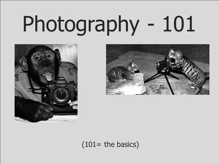 Photography - 101 (101= the basics). Failure is a crucial part of the creative process. Authentic success arrives only after we have mastered failing.