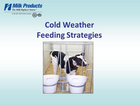 Cold Weather Feeding Strategies. What Influences Calf Growth? Nutrition Health Genetics Environment.