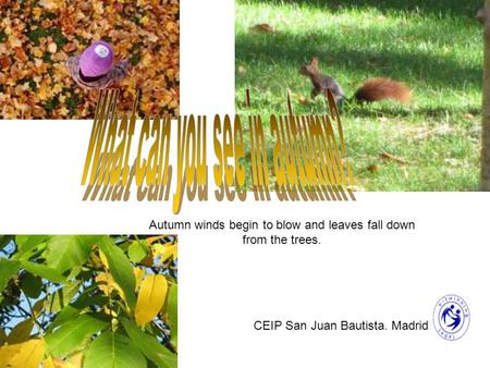 Autumn winds begin to blow and leaves fall down from the trees. CEIP San Juan Bautista. Madrid.