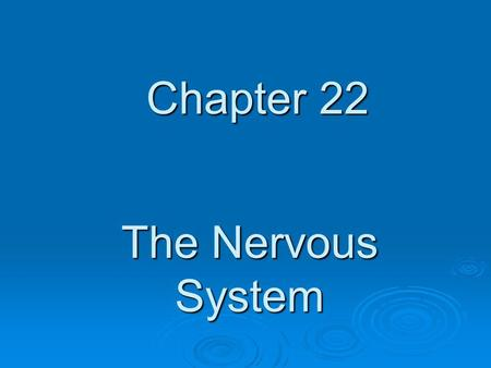 Chapter 22 The Nervous System.