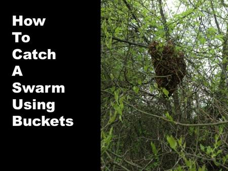How To Catch A Swarm Using Buckets. Take 2 plastic buckets and cut a large matching hole in the bottom of each. Using screen wire, preferably 1/8 hardware.