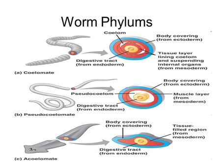 paraziti transmisi