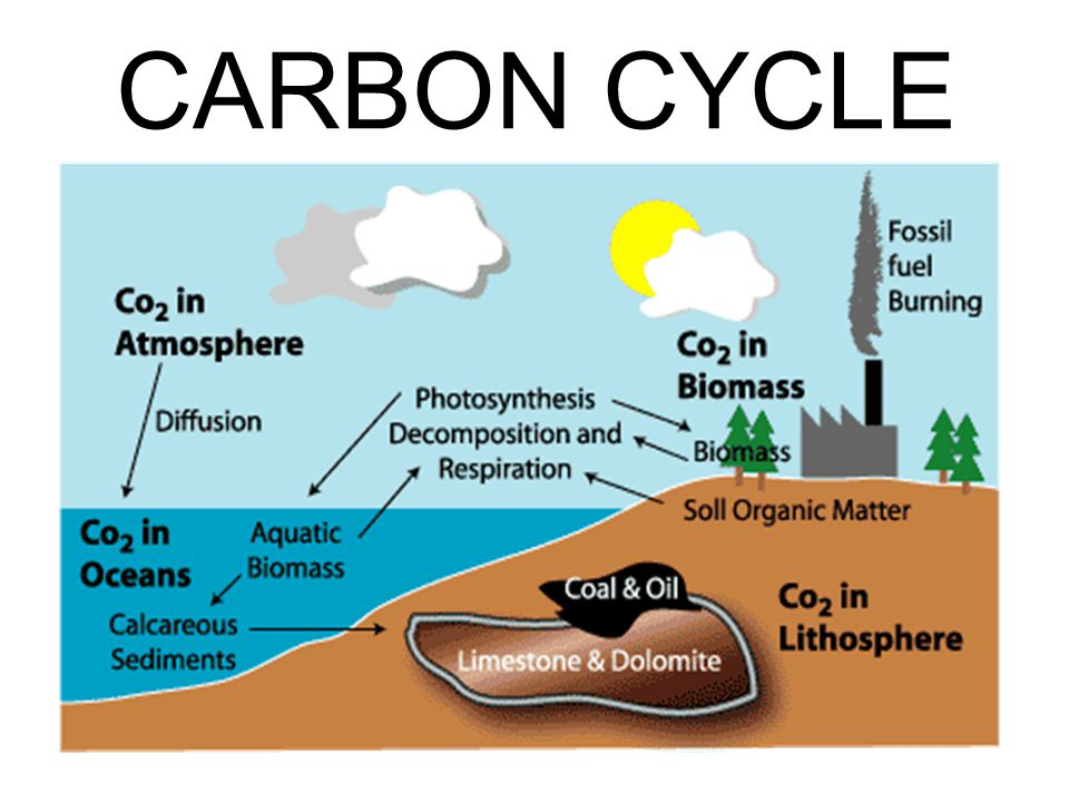 Fuels cycle fossil carbon The carbon