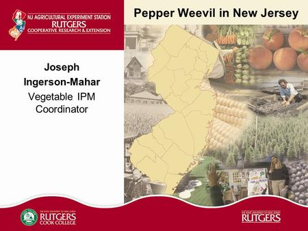 Pepper Weevil in New Jersey Joseph Ingerson-Mahar Vegetable IPM Coordinator.