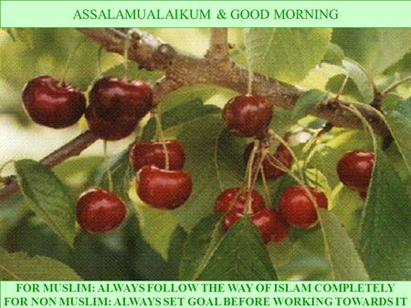 FOR MUSLIM: ALWAYS FOLLOW THE WAY OF ISLAM COMPLETELY FOR NON MUSLIM: ALWAYS SET GOAL BEFORE WORKING TOWARDS IT ASSALAMUALAIKUM & GOOD MORNING.