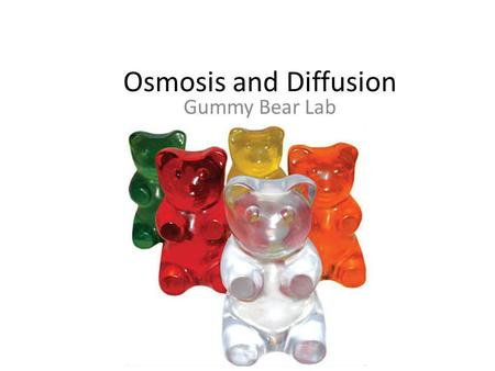 Osmosis and Diffusion Gummy Bear Lab.